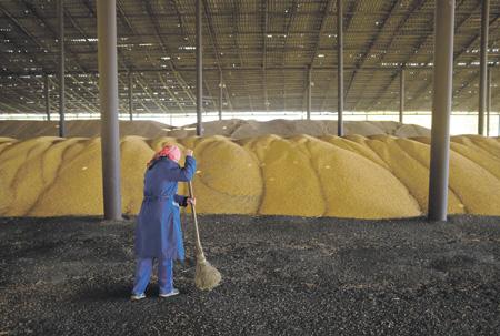 قرار تركيا بخصوص القمح الروسي وتبعاته على القطاع الزراعي الروسي   ترك برس