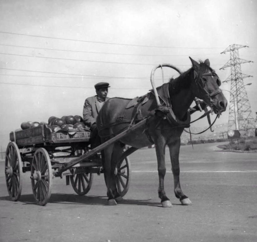 نتيجة بحث الصور عن عربات خيول النقل فى العصور الوسطى